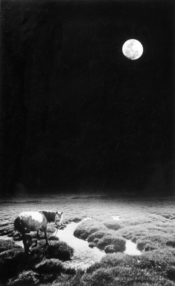 235 145(6寂静的夜1986.JPG