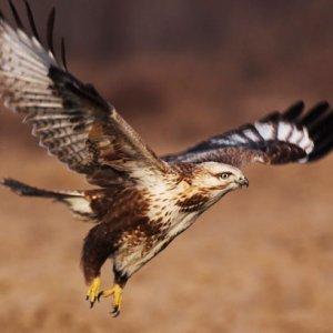 《蓝天王者》鸟类摄影展在大众影廊举行